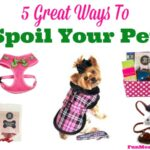 5 Great Ways To Spoil Your Pet