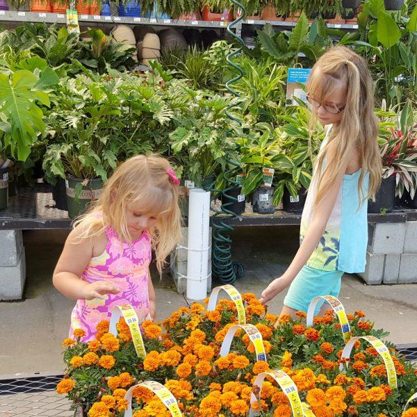 mini-fairy-gardens-choosing