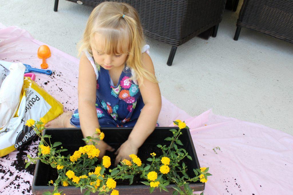 mini-fairy-gardens-planting-2