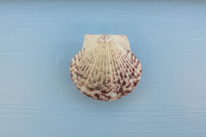 DIY-coastal-chic-side-table-shell-pull