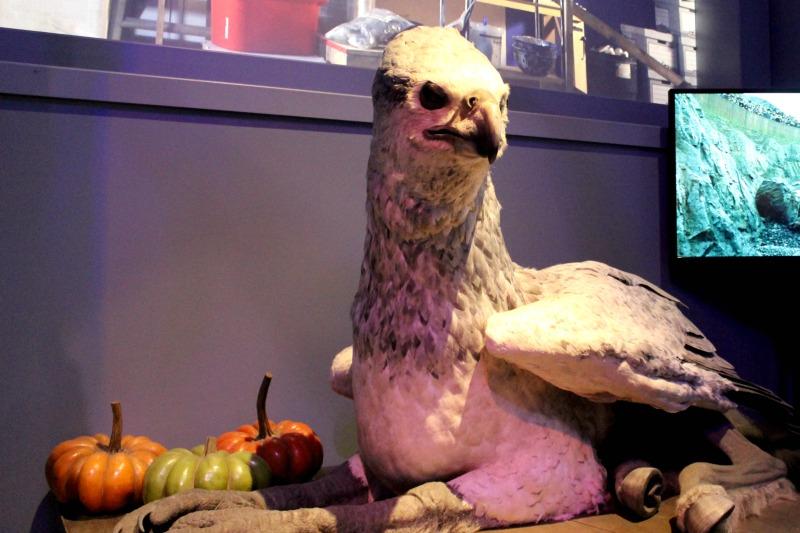 Harry-Potter-tour-bird