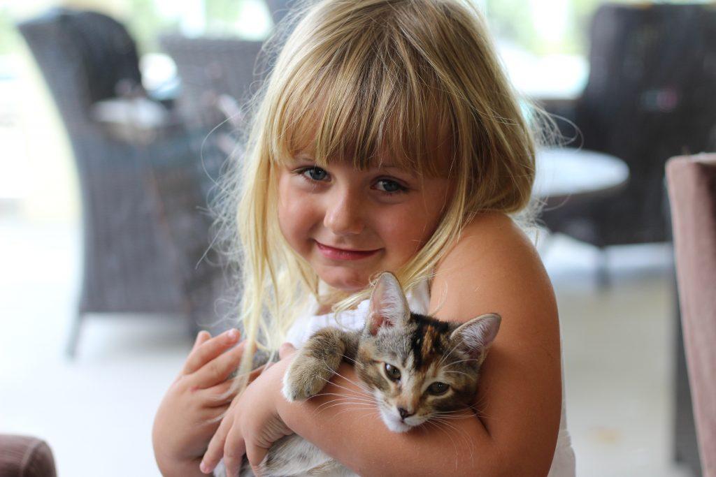 blog-hop-kittens-1