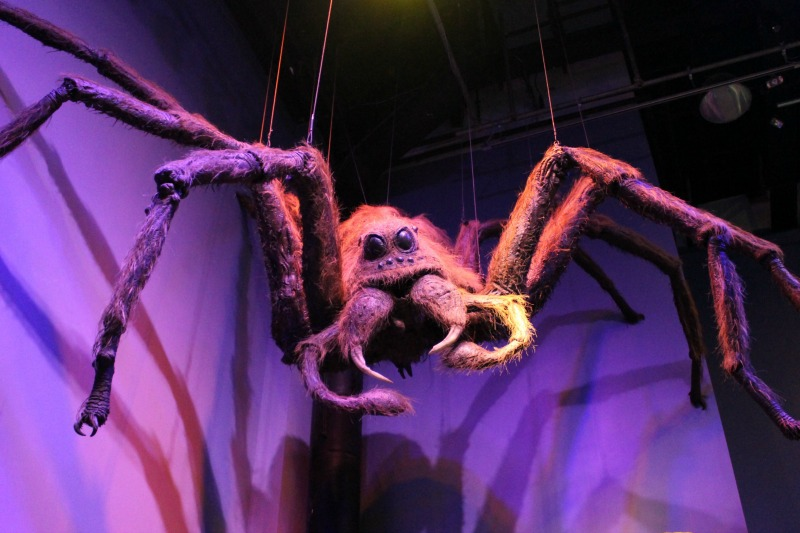 Harry-Potter-tour-spider