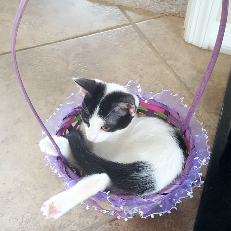 new-kitten-basket