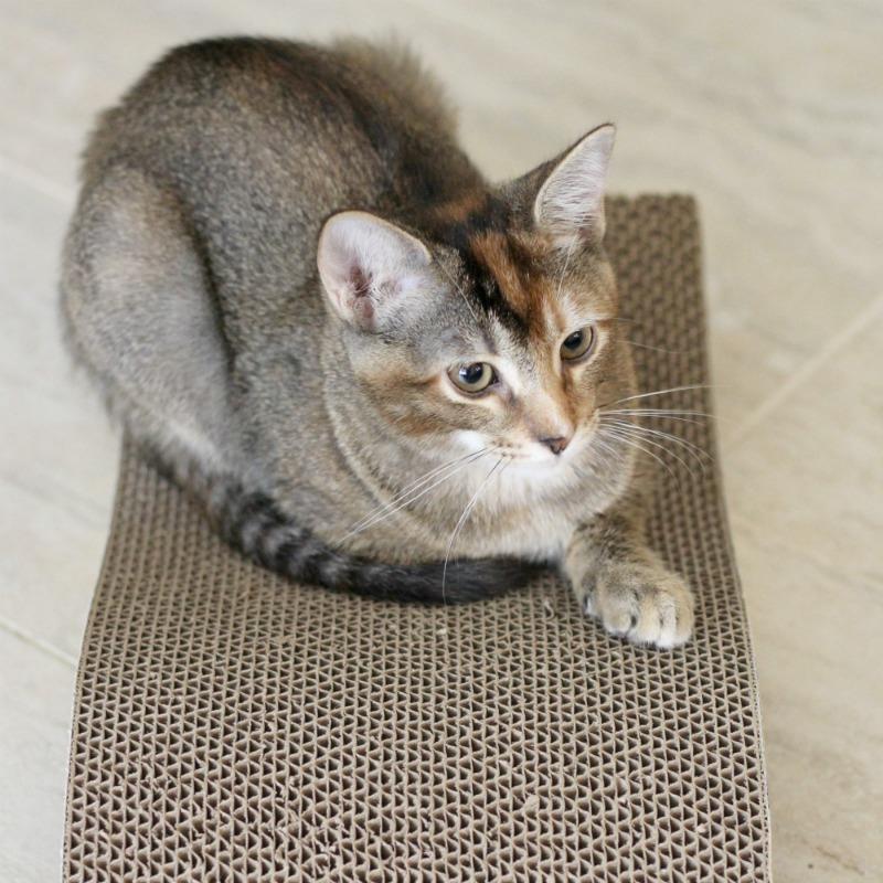 new-kitten-resting