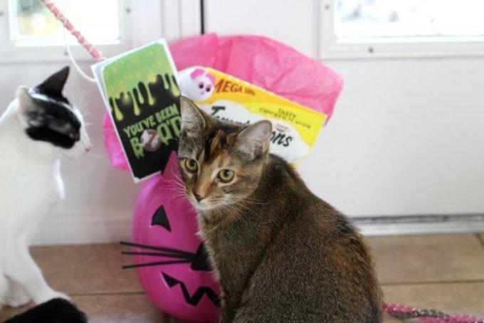 DIY-cat-trick-or-treat-bucket-cats
