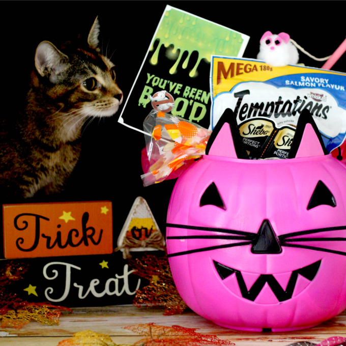 DIY-cat-trick-or-treat-bucket-dream