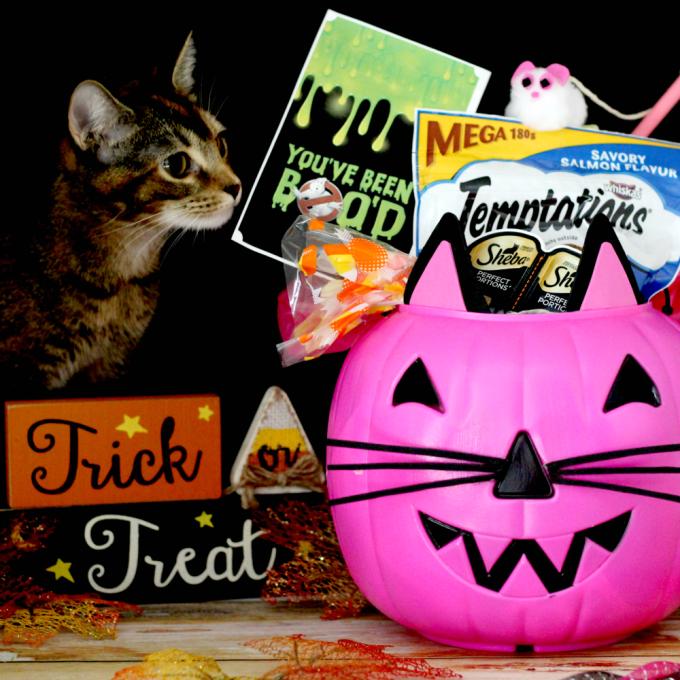DIY-cat-trick-or-treat-bucket-dream