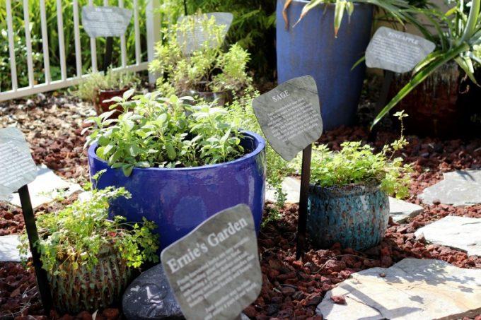Holiday-Inn-Orlando-Disney-Springs-herb-garden