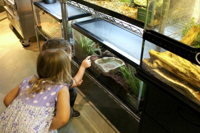 Jacksonville-Florida-mosh-aquarium