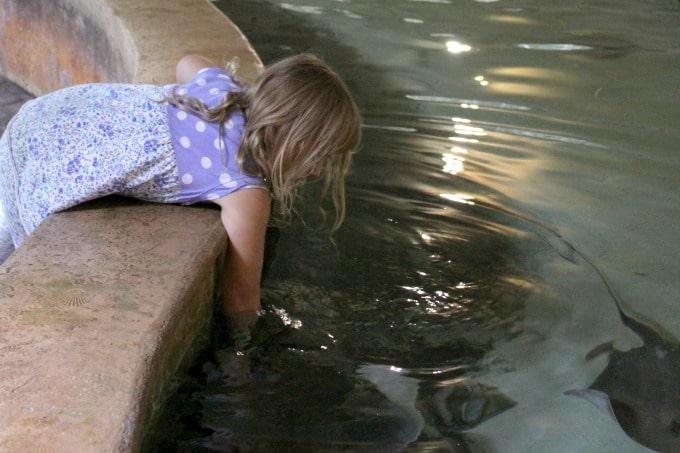 Jacksonville-Florida-zoo-stingrays