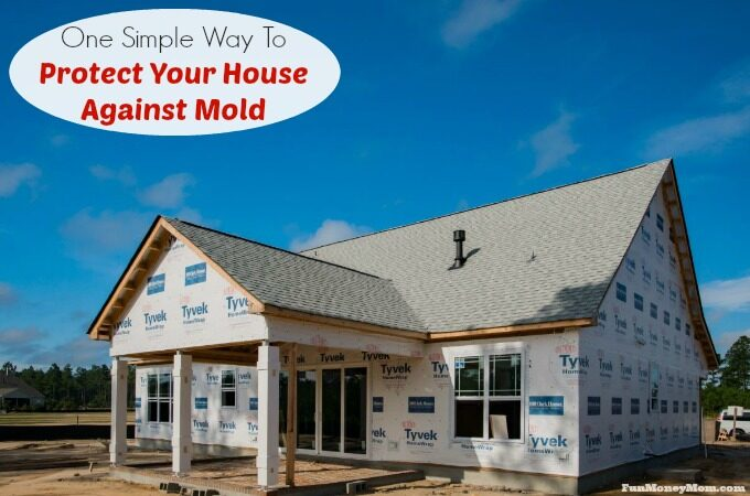 Protect your house against mold feature