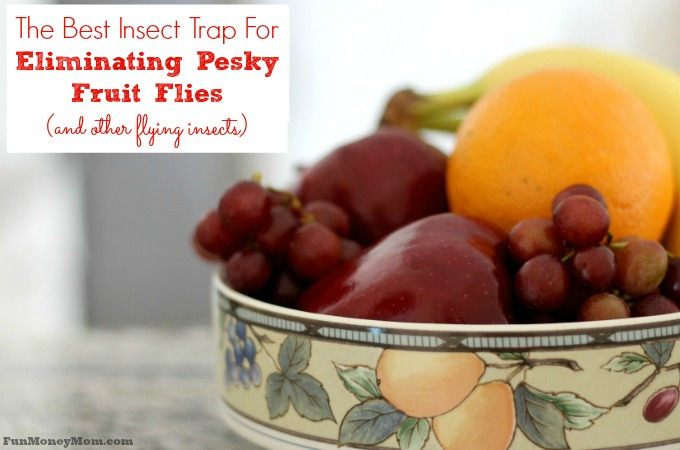 The Best Insect Trap For Eliminating Pesky Fruit Flies
