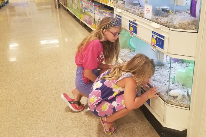 Life lessons aside, the girls love going to PetSmart to look at the hamsters and guinea pigs.