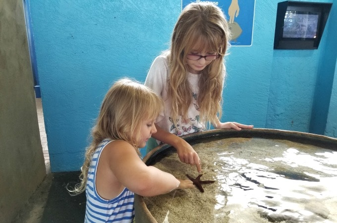 Getting up close and personal with animals at the Mote is one of my daughters' favorite things to do in Sarasota