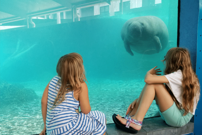#YouOtaVisit Sarasota, Florida to get up close and personal with manatees at the Mote Aquarium