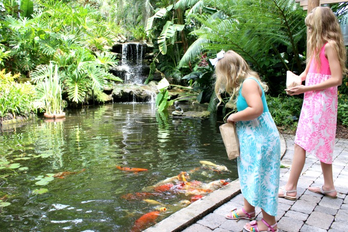 Visiting the Selby Botanical Gardens is just one of the fun things to do in Sarasota, Florida