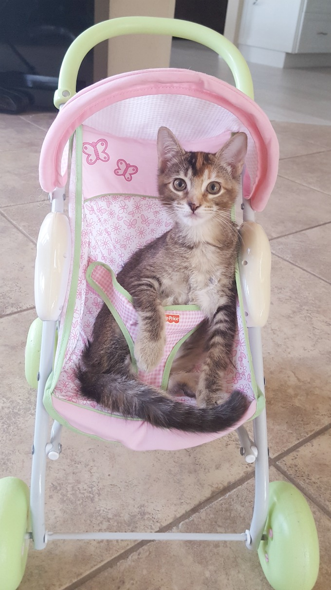 Amelia taking a ride in the stroller
