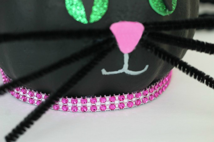 Black cat pumpkin with collar
