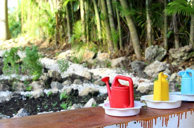 You may find a hidden garden when you vacation at Memories Splash Punta Cana