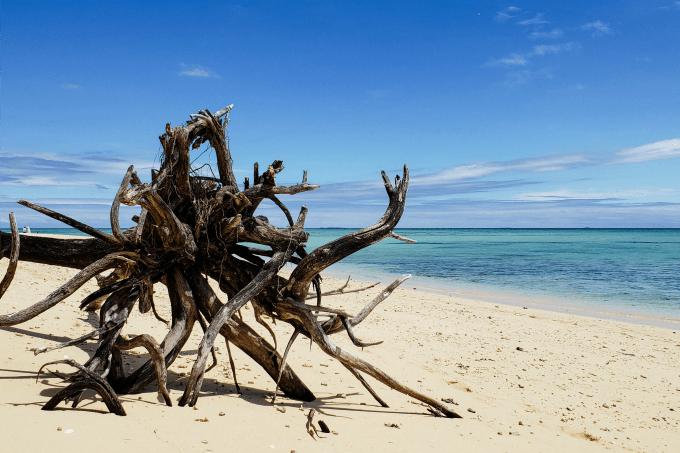 Driftwood on Tivua Island, Fiji