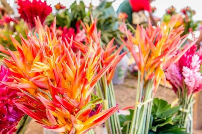 Tropical flowers at a farmer market in the Fiji islands