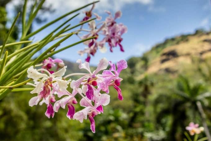 Garden Of The Sleeping Giants in Fiji