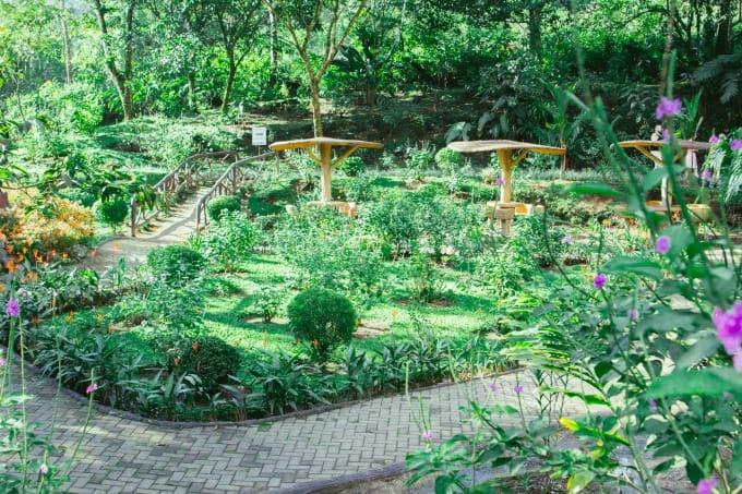 Gardens at Mistico Hanging Bridges Park in Arenal Costa Rica