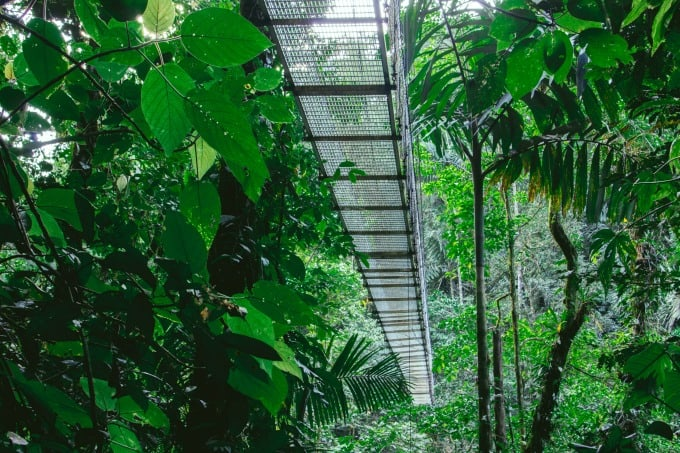 Another view of a bridge at Mistico Hanging Bridges in Arenal Costa Rica