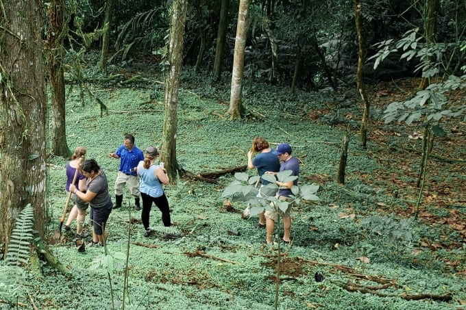 Planting a tree in Arenal