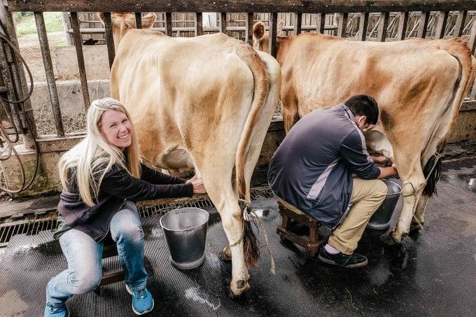 Milking cows at Corso Lecheria in Costa Rica