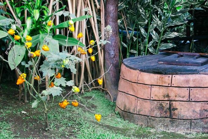Plants of Costa Rica