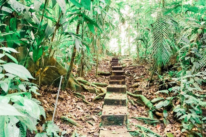 Stairs at La Selva Biological Station