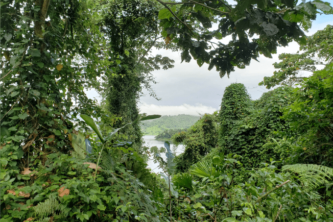 View from the path at La Selva Biological Station