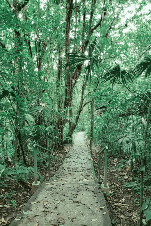 Accessible trails at La Selva Biological Station