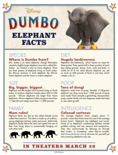 Dumbo Elephant Facts a