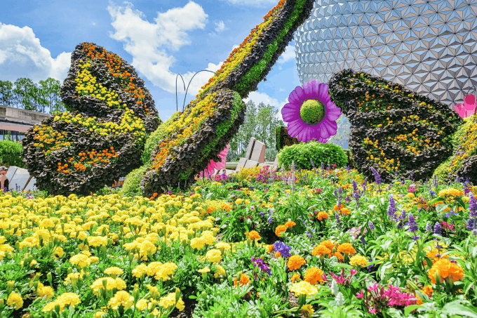 Butterflies at Epcot's Flower & Garden Festival