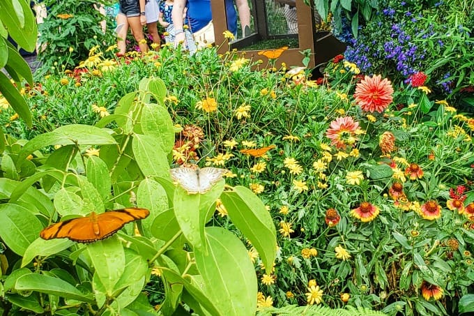 Butterfly garden at the Flower & Garden festival