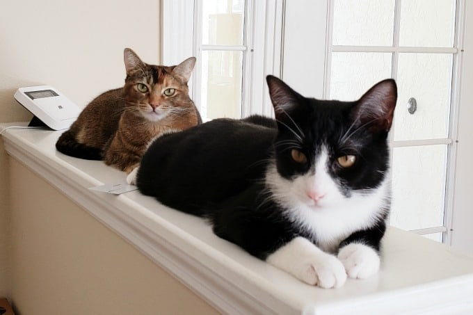 Cats sitting on ledge