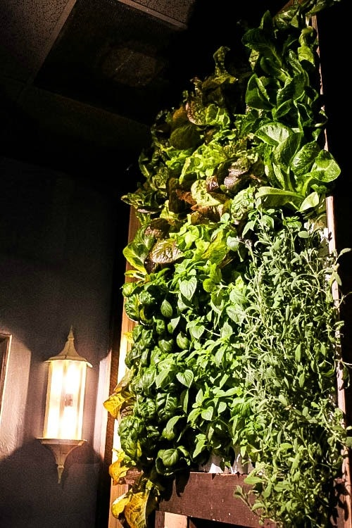 Living wall at one of the best places to eat in Clearwater Florida