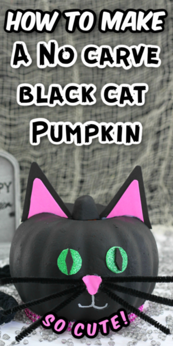 Black cat pumpkin with spiderweb background