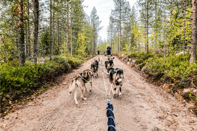 Racing with the huskies is one of the more popular family friendly things to do in Rovaniemi