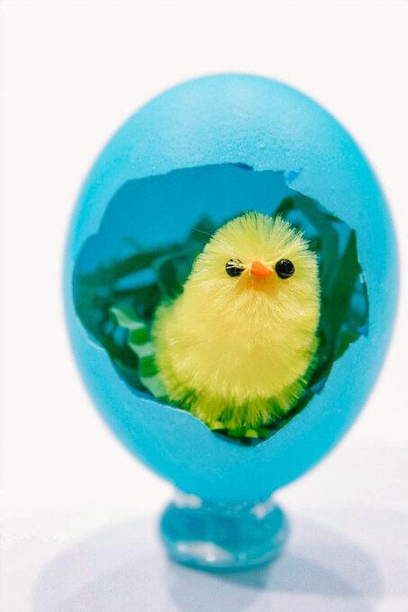 Easter chick in broken Easter egg